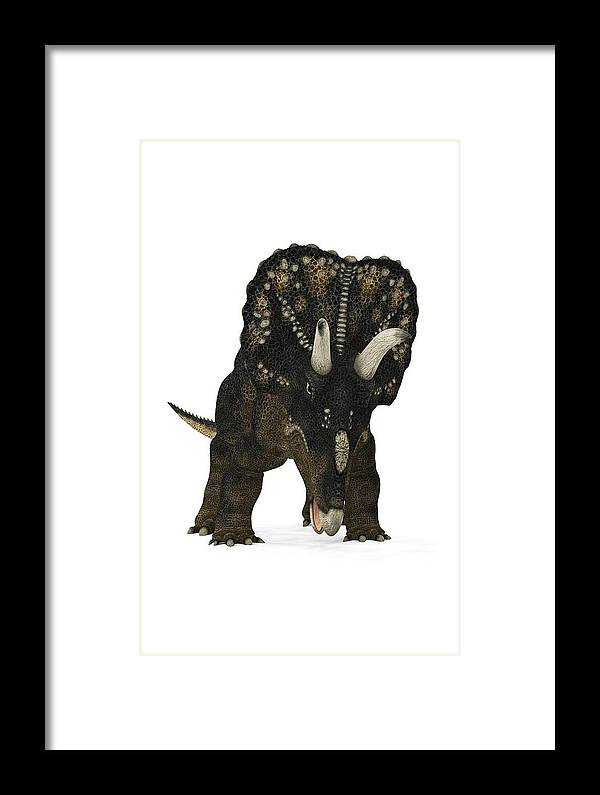 Nedoceratops Framed Print featuring the photograph Nedoceratops Dinosaur by Walter Myers