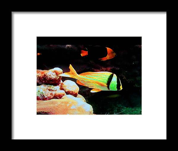 Fish Framed Print featuring the photograph Neon Fish by Val Oconnor