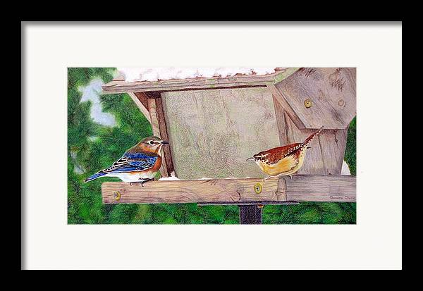 Bird Framed Print featuring the drawing New Girl In Town by Sandra Chase