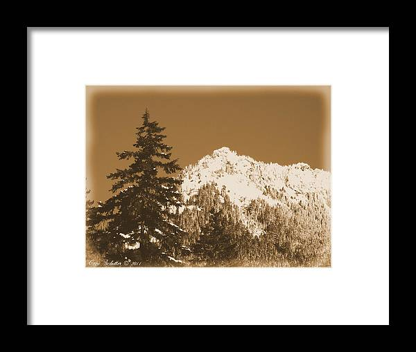 Trees Framed Print featuring the photograph New Snow by Carri Schutter