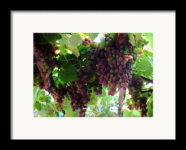 Wine Framed Print featuring the photograph New Wine by Alison Richardson-Douglas