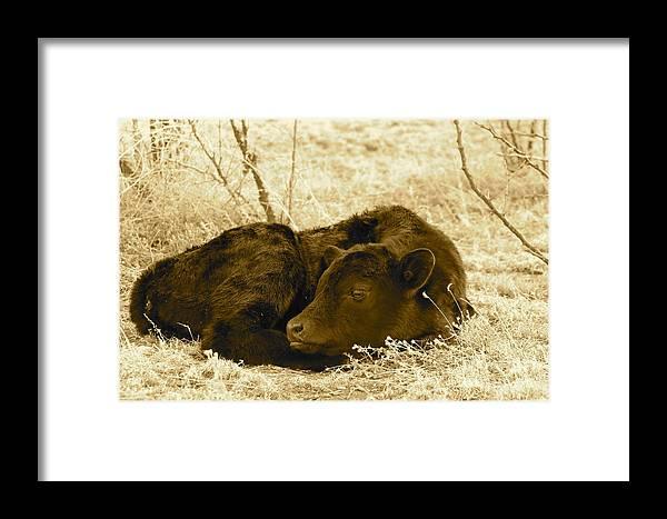 Newborn Framed Print featuring the photograph Newborn - Sepia by Pamela Walrath