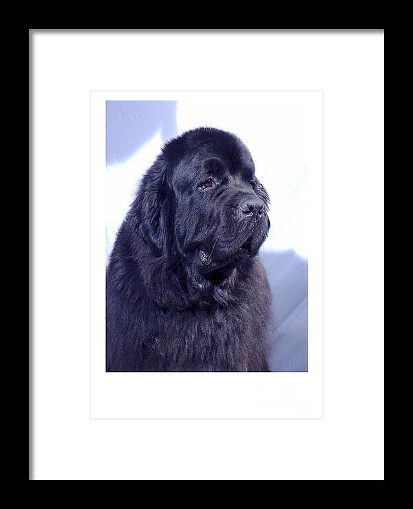 Newfoundland Digital Art Framed Print featuring the digital art Newfoundland 902 by Larry Matthews