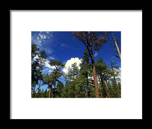 Greer Framed Print featuring the photograph Nimbus by Eric Neitzel
