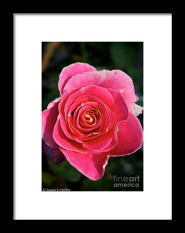 Flower Framed Print featuring the photograph Nine Am Opening by Susan Herber