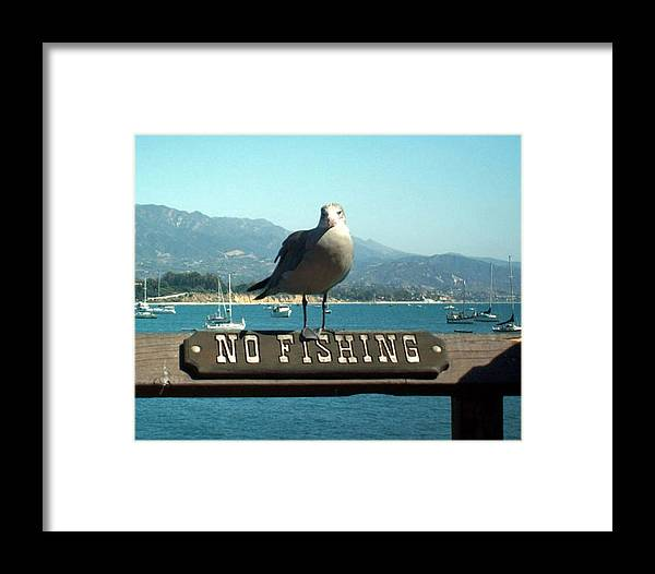 No Fishing Framed Print featuring the digital art No Fishing by Jean Paul LeBlanc