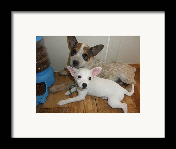 Puppy Framed Print featuring the photograph No Worries...i'm Here by Camille Reichardt