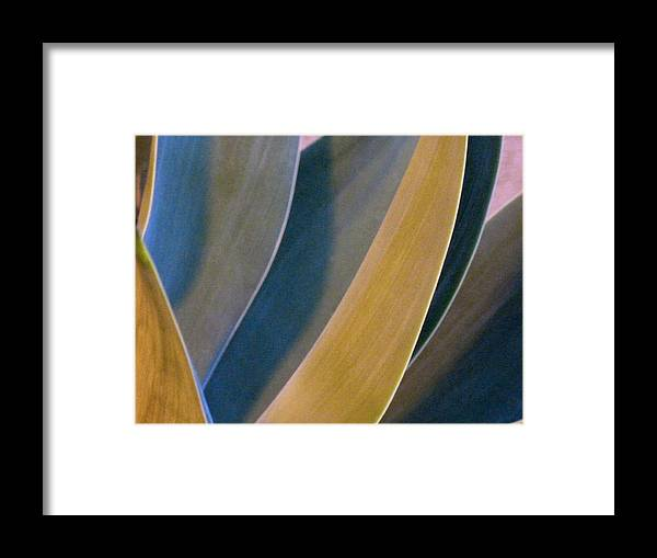 Plants Framed Print featuring the photograph Nocturnal Interludes 'round Midnight 2 by Paul Gladden