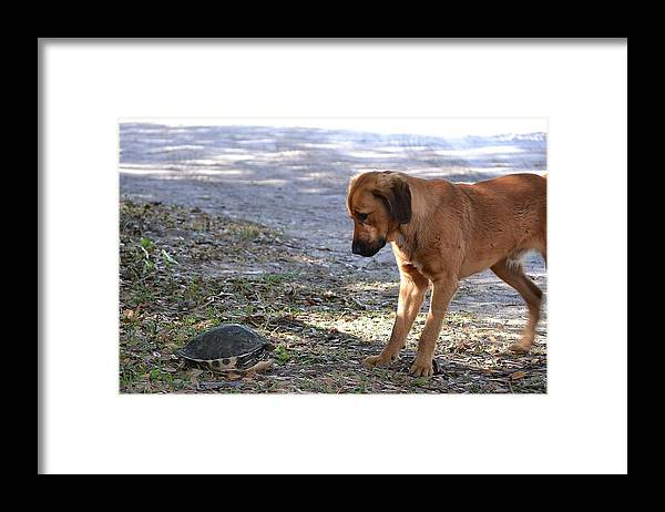 Framed Print featuring the photograph Not Share A Bout This by Katrina Johns