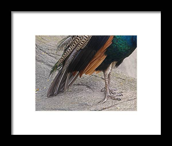 Peahen Framed Print featuring the photograph Her Kind Of Beauty by Ann Horn