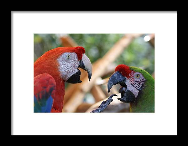 Macaw Framed Print featuring the photograph Now You Listen To Me by Andrea OConnell