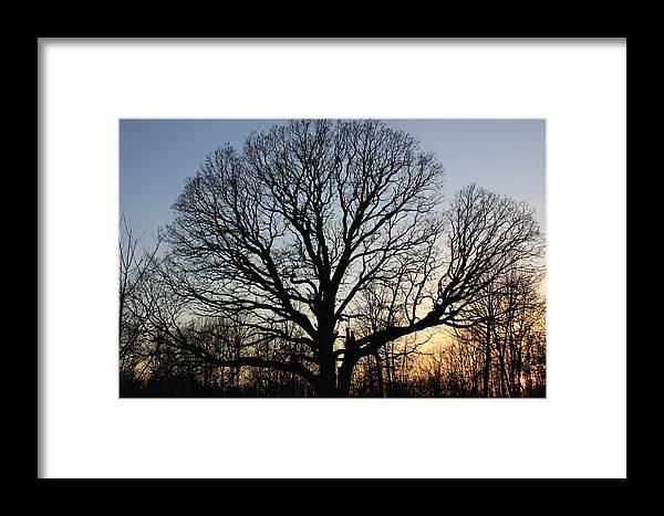 Nature Framed Print featuring the photograph oak Tree at sunset by Marie Halligan
