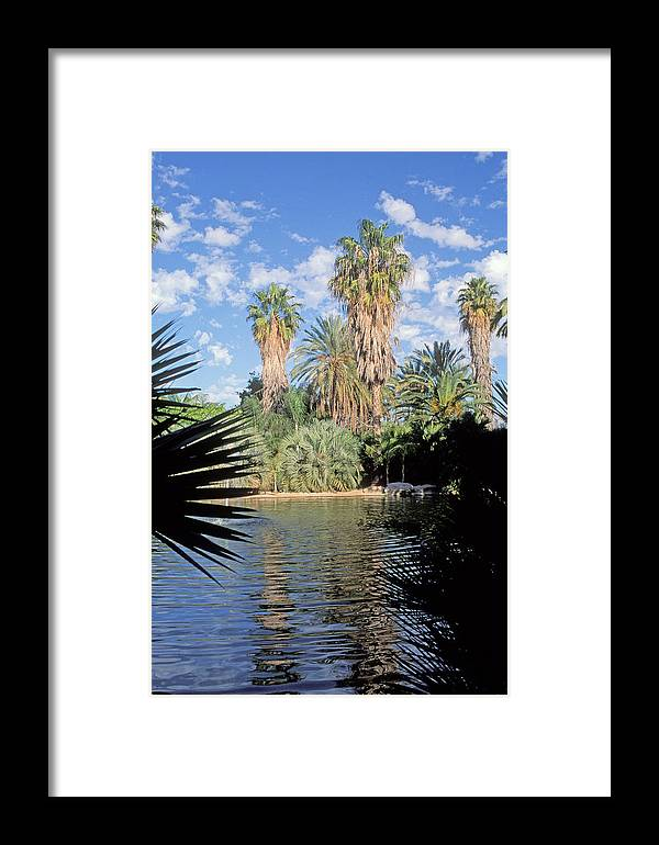 Palm Trees Framed Print featuring the photograph Oasis by Daniel Blatt