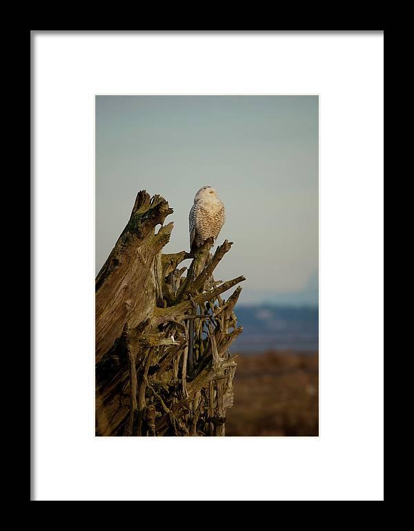 Owl Framed Print featuring the photograph Observant by Karen Ulvestad