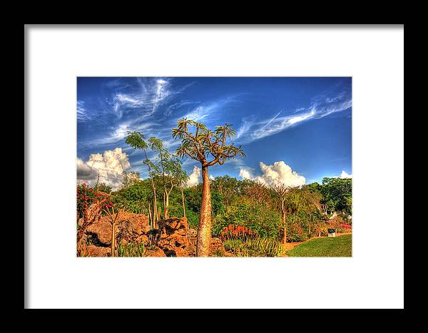 Trees Framed Print featuring the photograph Odd Trees by Armando Perez