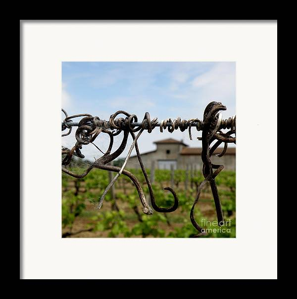 Vineyard Framed Print featuring the photograph Old And New by Lainie Wrightson