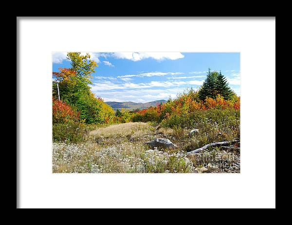 Landscape Framed Print featuring the photograph Old Logging Road by Marie Fortin