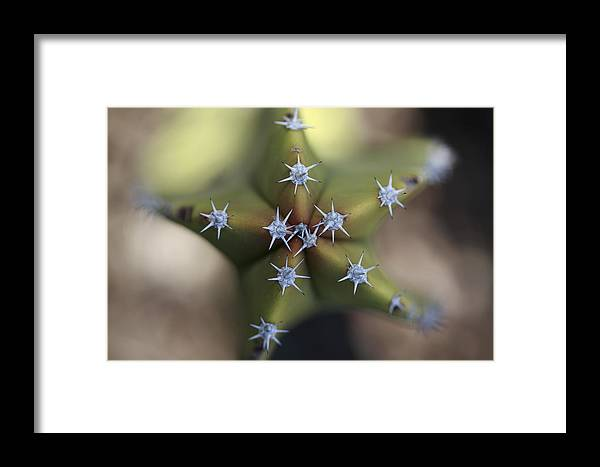 Mp Framed Print featuring the photograph Old Man Cactus Lophocereus Schottii by Cyril Ruoso