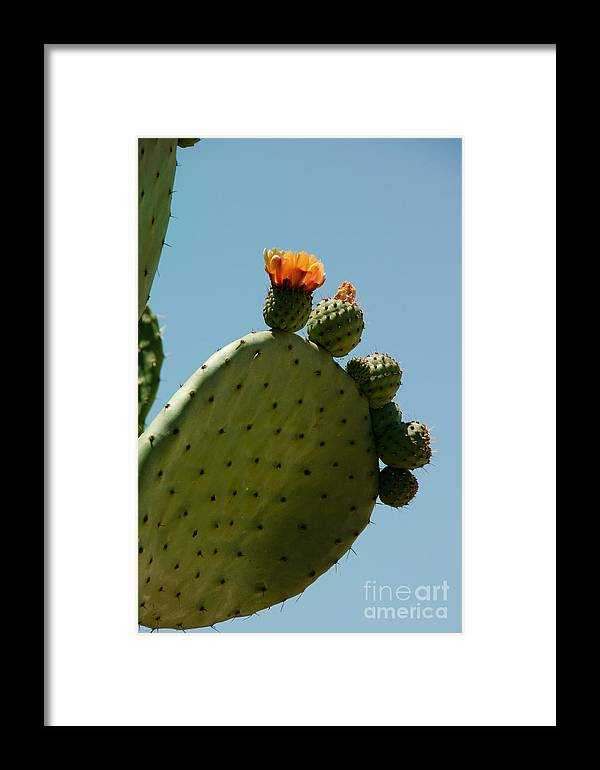 Cactus Framed Print featuring the digital art Old Town San Diego by Carol Ailles