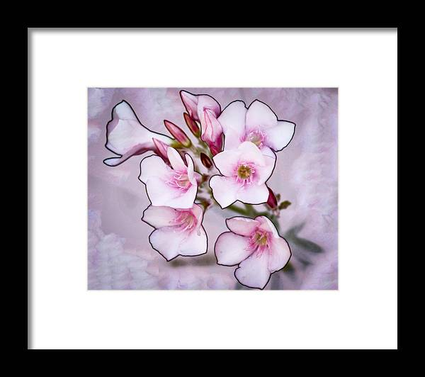 Flowers Framed Print featuring the photograph Oleander Blossoms by Jim Painter