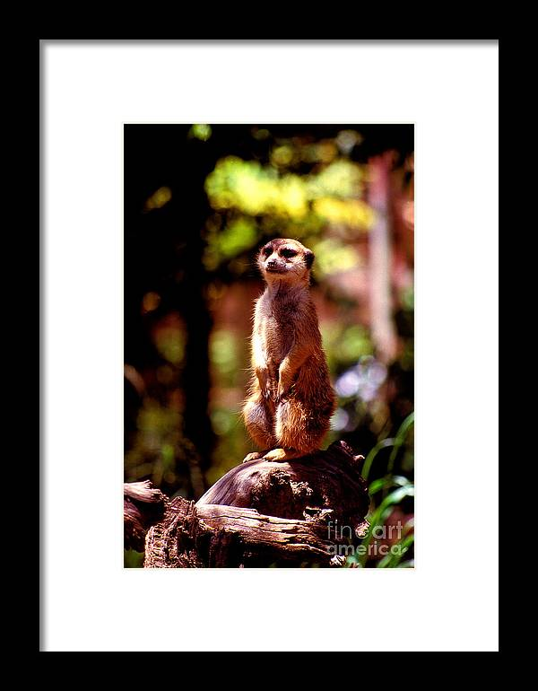 Vertical Framed Print featuring the photograph On Guard by Paul W Faust - Impressions of Light