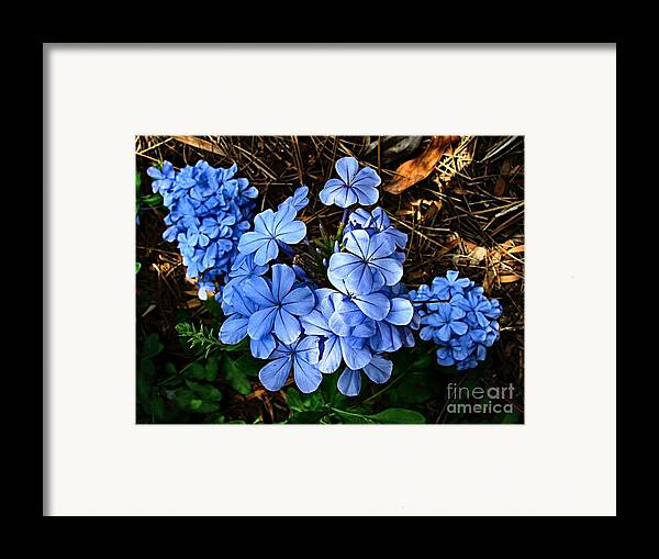 Blue Flowers Framed Print featuring the photograph On The Forest Floor by Julie Dant