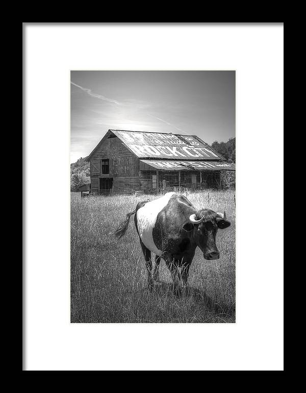 Cow Framed Print featuring the photograph On The Move by David Troxel