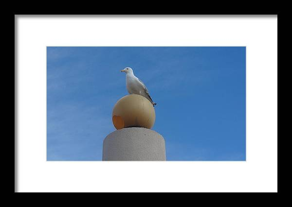 Seagull Framed Print featuring the photograph On Top of the World by Jessica Cruz