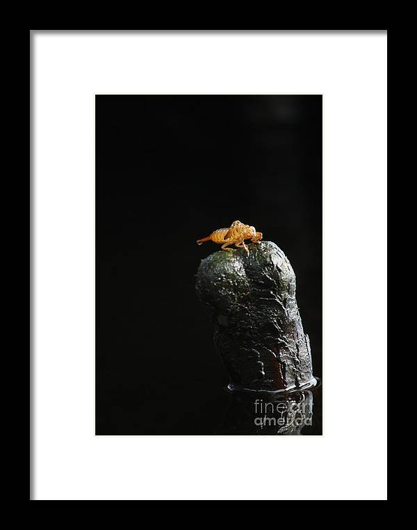 Larva Framed Print featuring the photograph Once Was by Jack Norton