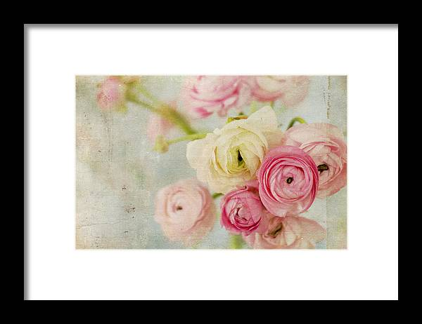 Ranunculus Framed Print featuring the photograph One Fine Day by Kristy Campbell