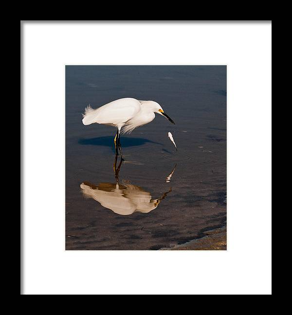Bird Framed Print featuring the photograph Ooops by Geraldine Alexander