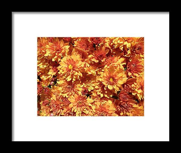 Flowers Framed Print featuring the photograph Orange Chrysanthemums by Kate Gallagher