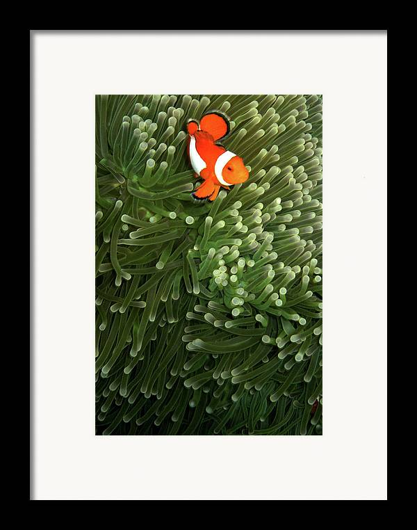 Vertical Framed Print featuring the photograph Orange Fish With Yellow Stripe by Perry L Aragon