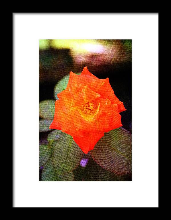 Orange Framed Print featuring the photograph Orange Rose Blossom by Ester Rogers