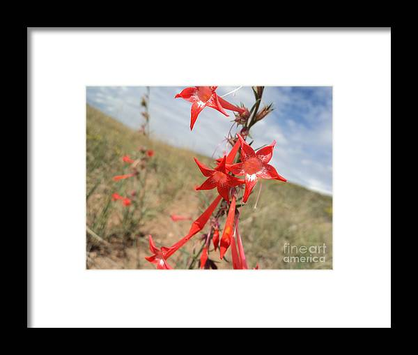 Flower Framed Print featuring the photograph Orange Wildflower by Dirk Barnhart