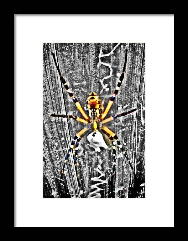 Spider Framed Print featuring the photograph Orb Spider by Glenda Graham