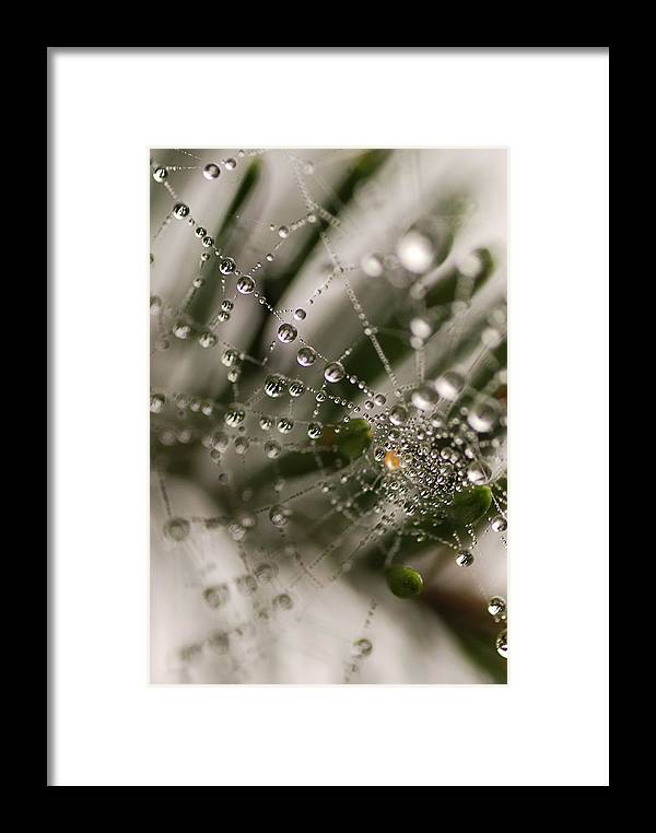 Web Framed Print featuring the photograph Orbiting The Web by Susan Capuano