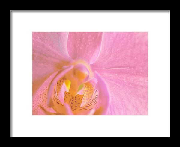 Orchid Framed Print featuring the photograph Orchid 4 by John Girt