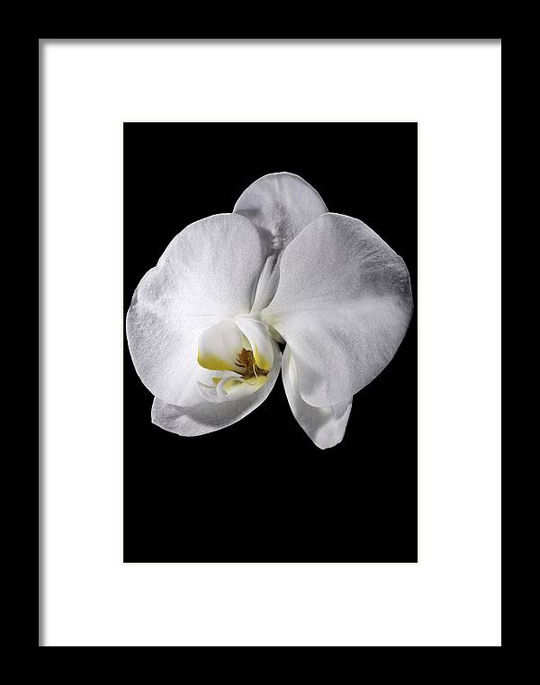 Flower Framed Print featuring the photograph Orchid by Nathaniel Kolby