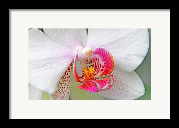 Becky Framed Print featuring the photograph Orchids 10 by Becky Lodes