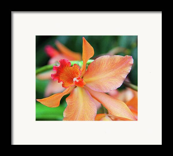 Becky Framed Print featuring the photograph Orchids 25 by Becky Lodes