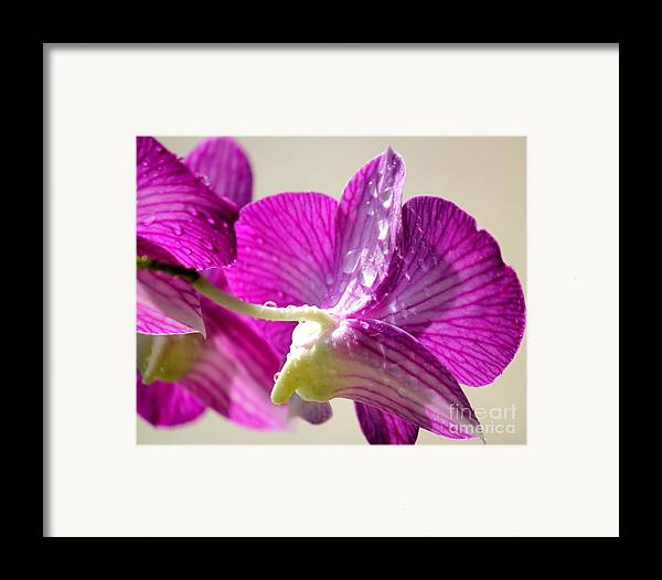 Orchids Framed Print featuring the photograph Orchids And Raindrops by Theresa Willingham