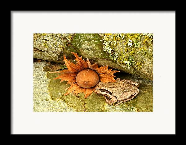 Amphibians Framed Print featuring the photograph Oregon Combo by Jean Noren