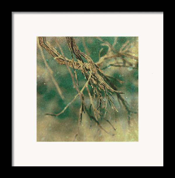 Tree Framed Print featuring the photograph Organic by Mark Ross