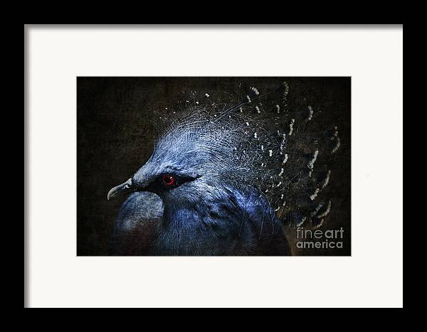 Photomanipulation Framed Print featuring the photograph Ornamental Nature by Andrew Paranavitana
