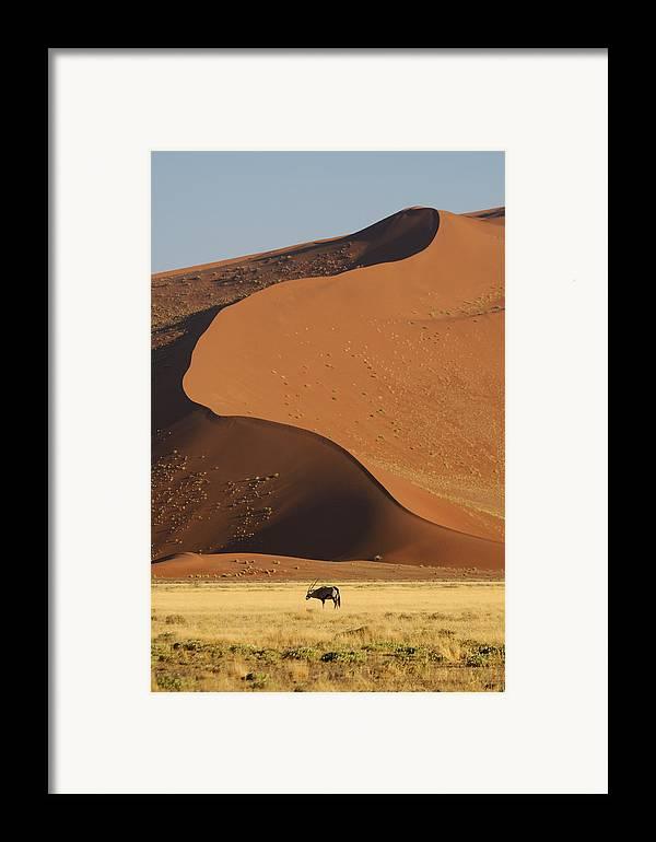 Gemsbok (oryx Gazella) Framed Print featuring the photograph Oryx II by Christian Heeb