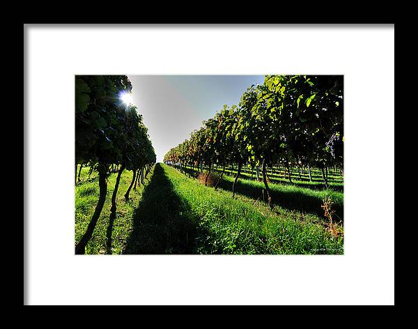 Wesley Framed Print featuring the photograph Osoyoos Vineyard by Wesley Allen Shaw