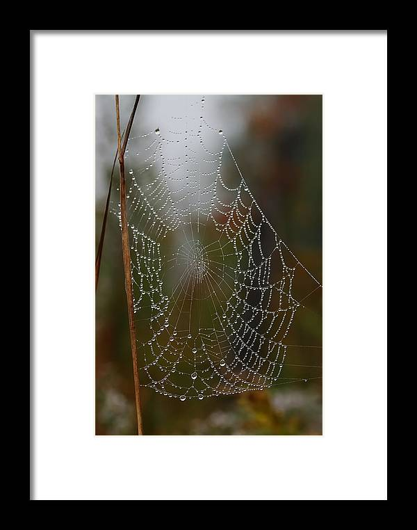 Nature Framed Print featuring the photograph Out In The Morning Dew by Susan Capuano