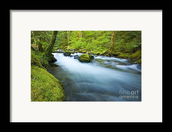 Skate Creek Framed Print featuring the photograph Out Of The Rainforest by Mike Dawson