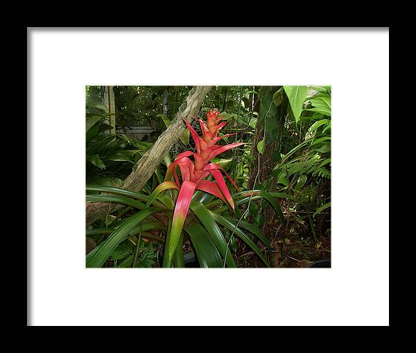Flower Framed Print featuring the photograph Out Of This World by Sheila Silverstein
